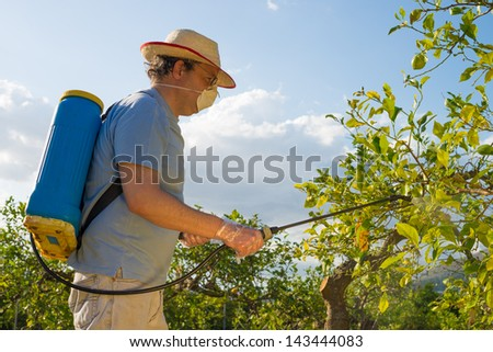 Agricultural worker in a citrus plantation spraying pesticide