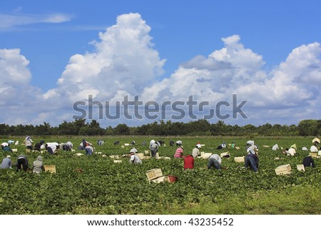 agricultural workers harvesting the crop
