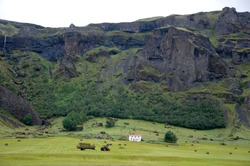 agricultural works in a farm surroundind the icelandic green.jpg