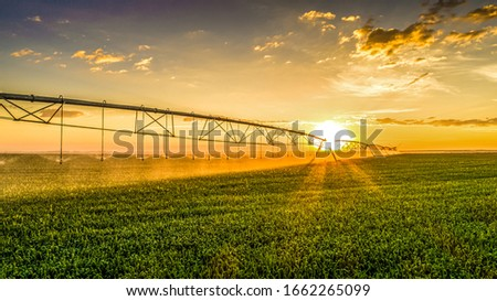 Agriculture - Aerial image, Pivot irrigation used to water plants on a farm. sunset, circular pivot irrigation with drone - Agribusiness