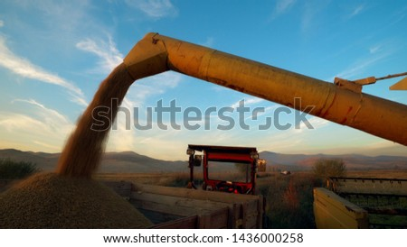 Agriculture and harvest, combine unload harvested wheat into tractor #1436000258
