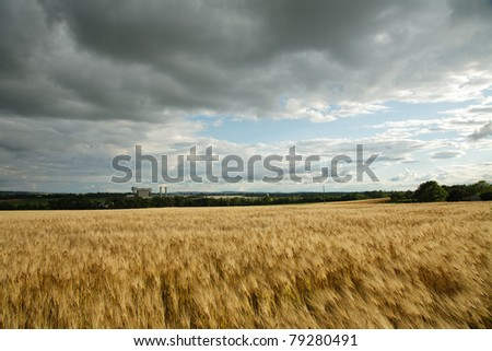 Agriculture and industrialization coexisting- A field of barley next to an asphalt shingle plant