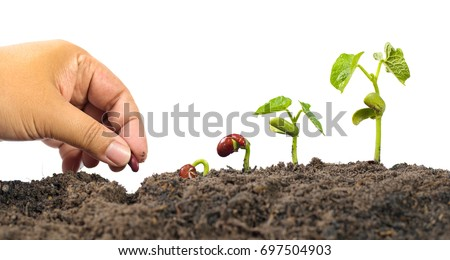 Agriculture and New life starting concept. Farmer hand seed planting with seed germination sequence over isolated on white background