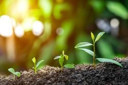 Agriculture and plant grow sequence with morning sunlight and dark green blur background. Germinating seedling grow step sprout growing from seed. Nature ecology and growth concept with copy space.