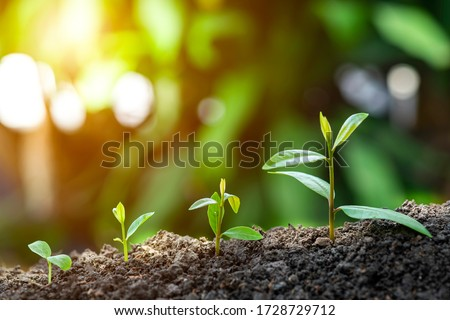 Photo of  Agriculture and plant grow sequence with morning sunlight and dark green blur background. Germinating seedling grow step sprout growing from seed. Nature ecology and growth concept with copy space.