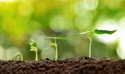 Agriculture and Seeding Plant seed growing step concept