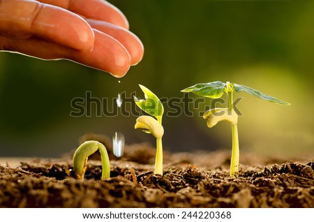 Agriculture and Seedling concept by Male hand watering young tree over green background