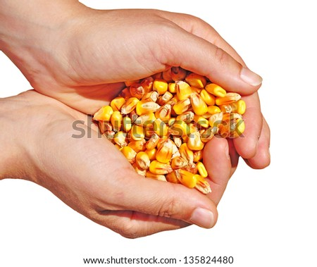 Agriculture, biotech, gm corn commodity