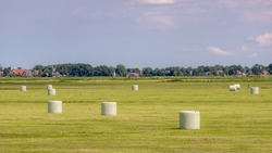Agriculture concept, Freshly mown grassland wrapped hay bales with plastic on green meadow, Harvest straw bales on Dutch polder, Livestock in the farm in summer, Countryside landscape in Netherlands.
