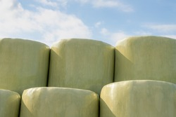 Agriculture concept, Staked of freshly mown grass wrapped hay bales with plastic, Harvest straw bales in the farmland, Livestock in the farm in summer, Countryside landscape in Netherlands.
