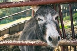 Agriculture donkey animals living outside. Rural country atmosphere. Polish animals