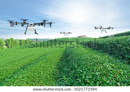 Agriculture drone fly to sprayed fertilizer on the green tea fields, Smart farm 4.0 concept #1021771984