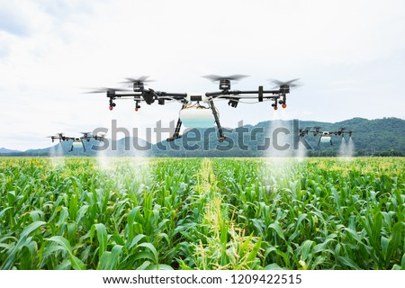 Agriculture drone fly to sprayed fertilizer on the sweet corn fields #1209422515