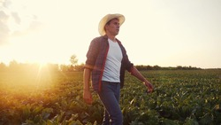 agriculture. Farmer man in a walk on a green field of a field of healthy food. business agriculture concept farmer walk home after harvesting at sunset. farmer walk agriculture concept natural food