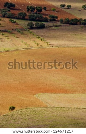 Agriculture fields of crops, olive oils in Alentejo region, Portugal