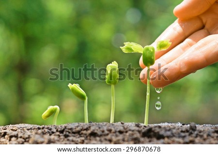Agriculture. Growing plants. Plant seedling. Hand nurturing and watering young baby plants growing in germination sequence on fertile soil with natural green background                                - Shutterstock ID 296870678