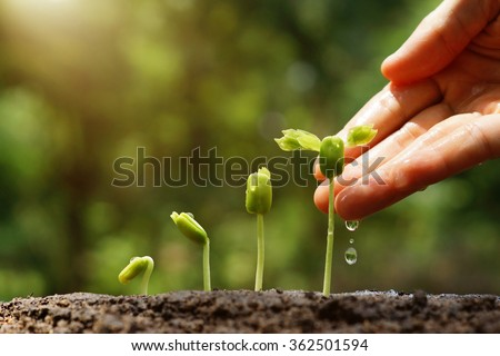 Agriculture. Growing plants. Plant seedling. Hand nurturing and watering young baby plants growing in germination sequence on fertile soil with natural green background                                #362501594
