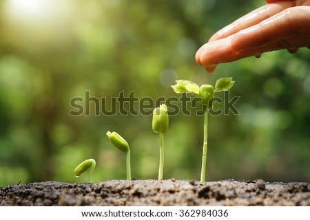 Agriculture. Growing plants. Plant seedling. Hand nurturing and watering young baby plants growing in germination sequence on fertile soil with natural green background                                - Shutterstock ID 362984036