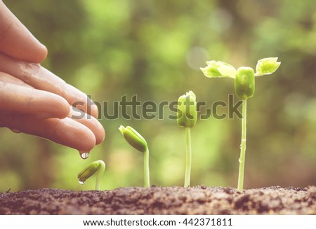 Agriculture. Growing plants. Plant seedling. Hand nurturing and watering young baby plants growing in germination sequence on fertile soil with natural green background - Shutterstock ID 442371811