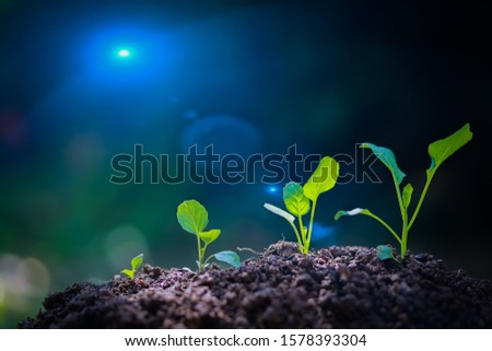 Agriculture, growing plants, seedlings, plants, nourishing and watering saplings that are planted on fertile ground with natural green backgrounds.