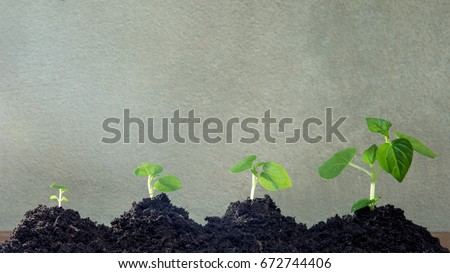 Stock Photo Agriculture.Growing plants with Copy space , Plant growth-New beginnings step , Ecological friendly and sustainable environment concept