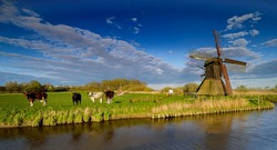 Agriculture idyllic landscape with cows and windmill. Historic water scoop mill and natural agriculture landscape by Wilstermarsch, Schleswig-Holstein, Germany.
