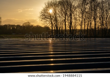 Agriculture in North Brabant, spring fields covered with black plastic film for cultivation of white asparagus vegetables, Netherlands Foto stock ©