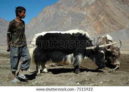 agriculture in The Himalayas
