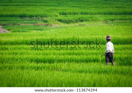 Agriculture in the Northern part of Vietnam
