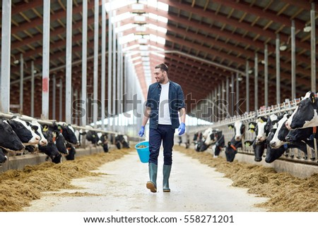 agriculture industry, farming, people and animal husbandry concept - happy young man or farmer with bucket of hay walking along cowshed and cows on dairy farm