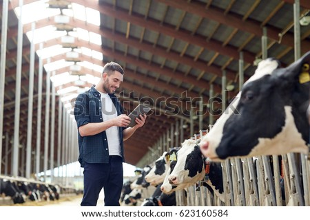agriculture industry, farming, people, technology and animal husbandry concept - young man or farmer with tablet pc computer and cows in cowshed on dairy farm #623160584