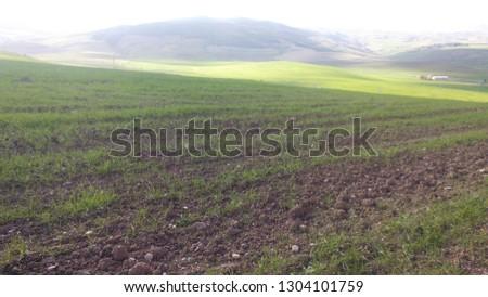 Agriculture land Algeria   #1304101759