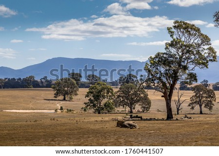 Agriculture landscape in the Grampians national park in Victoria, Australia at a cloudy day in summer. Stock photo ©