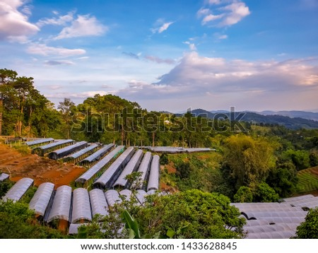 Agriculture on sloping mountain slopes at Mae salong,Chiang Rai.beautiful background #1433628845