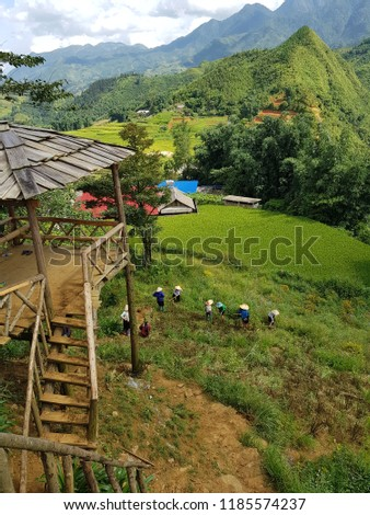 agriculture on the hill at Sapa vietnam #1185574237