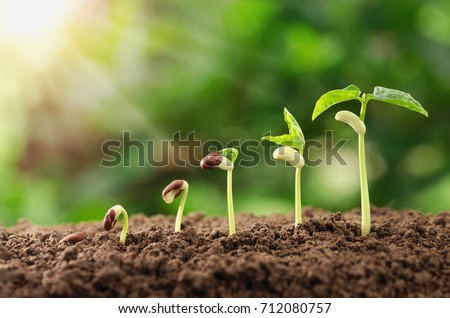 Photo of  agriculture plant seeding growing step concept in garden and sunlight