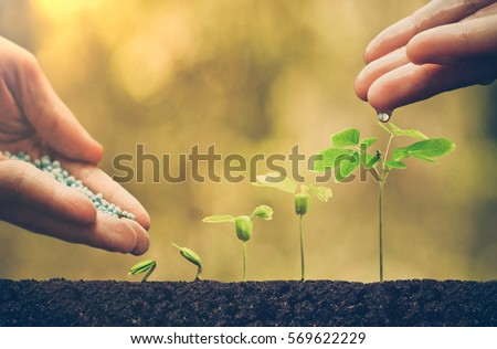 Agriculture. Plant seedling. Hand nurturing and watering young baby plants growing in germination sequence on fertile soil with natural green background ストックフォト ©