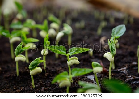 Agriculture, Seeding, Plant seed growing