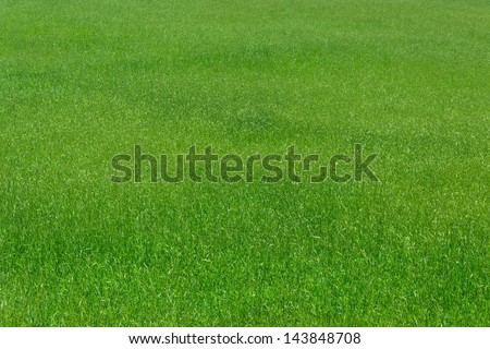 agriculture wheat growth field nature background - Shutterstock ID 143848708