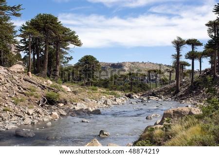 Agrio river, Patagonia, Neuqen. Land of dinosaurs. Provincial Park of Copahue.