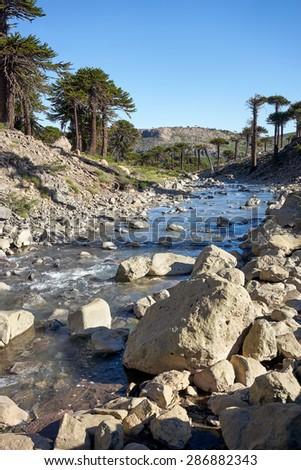Agrio river, Patagonia, Neuquen. Land of dinosaurs. Provincial Park of Copahue