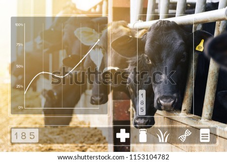 Agritech concept with dairy cows feeding in a barn and data app display overlayed. Foremost cow has yellow wireless data tag and is highlighted with box showing that it is currently selected.