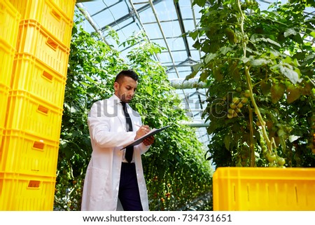 Agro-engineer in whitecoat making research in hothouse among tomato vegetation