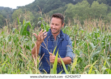 Agronomist analyzing cereals in corn field
