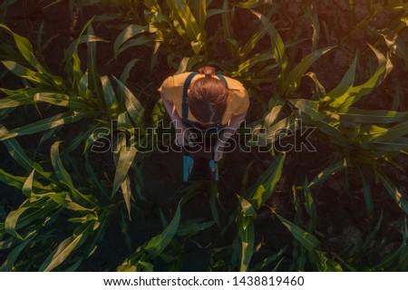 Agronomist farmer woman using tablet computer in corn field. Aerial view of female farm worker in maize plantation with modern technology app analyzing crop development, top view from drone pov