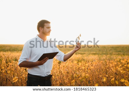 Agronomist inspecting soya bean crops growing in the farm field. Agriculture production concept. young agronomist examines soybean crop on field in summer. Farmer on soybean field Foto d'archivio ©
