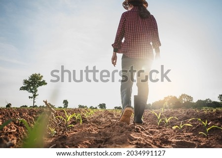 Agronomist Using tablet and Technology in Agricultural Corn Field . Farmer walking in corn field with  tablet. Woman farmer with laptop and walking on harvested corn field .