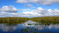 Airboat ride at Everglades Park, at Homestead, Florida