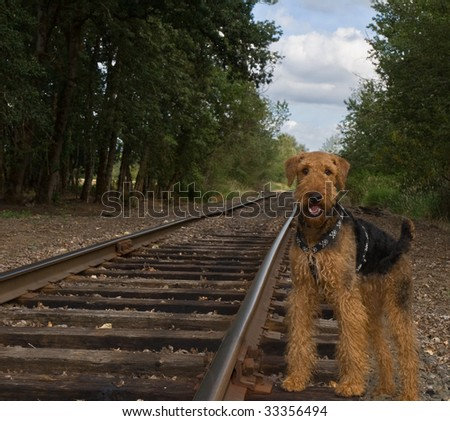 Airedale terrier dog on abandoned railroad track outdoors