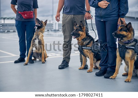 Airport security workers with two German Shepherd dogs and Malinois dog guarding territory Сток-фото ©
